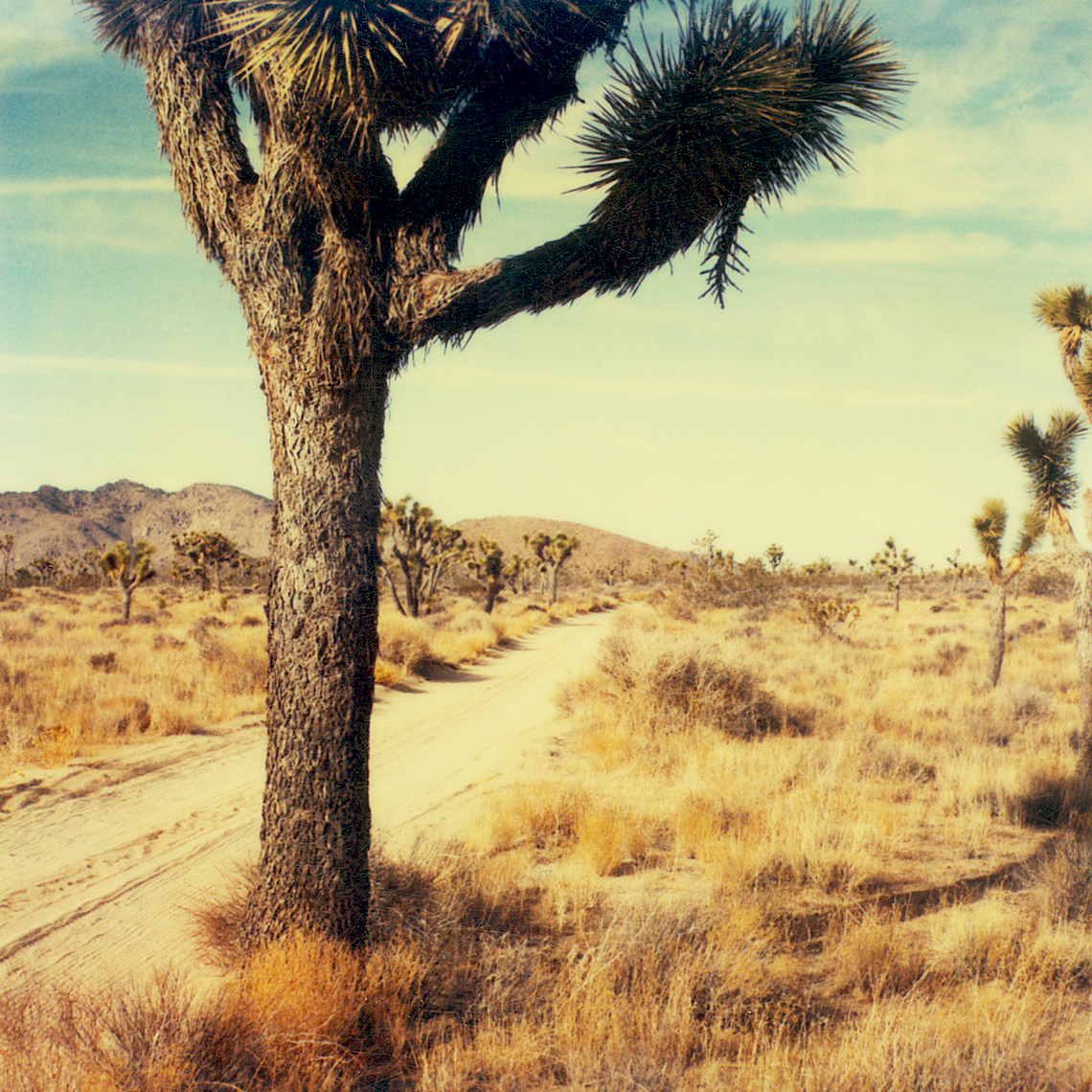 joshuatree.bright.webres